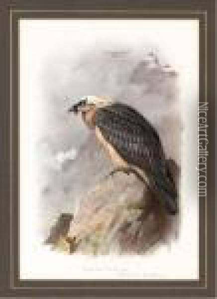 A Bearded Vulture Oil Painting - Archibald Thorburn