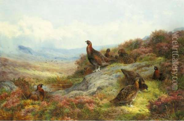 Red Grouse In A Landscape Oil Painting - Archibald Thorburn