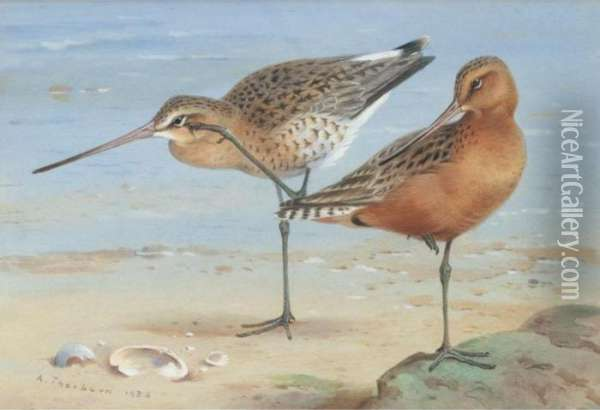 A Pair Of Bar-tailed Godwit Oil Painting - Archibald Thorburn