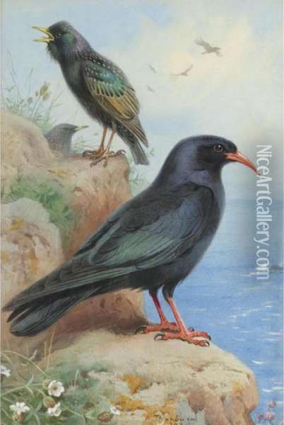 A Rock Starling And A Common Chough Oil Painting - Archibald Thorburn