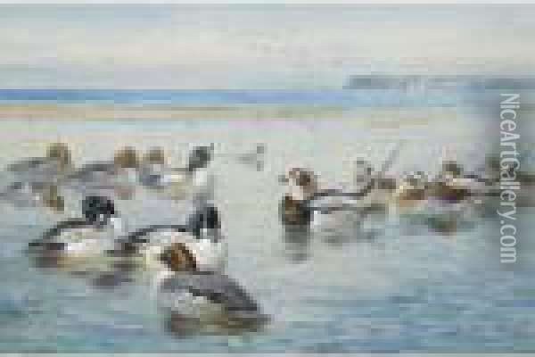 Goldeneyes And Longtails Oil Painting - Archibald Thorburn