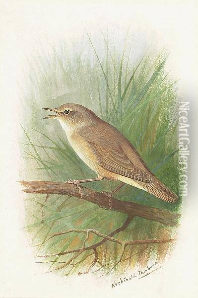 A Nightingale Oil Painting - Archibald Thorburn