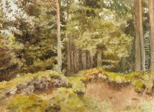 An Essex Wood Oil Painting - Archibald Thorburn