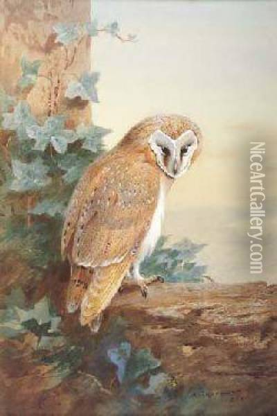 Barn-owl Oil Painting - Archibald Thorburn