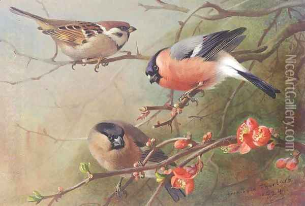 Tree Sparrow And Bullfinches Oil Painting - Archibald Thorburn