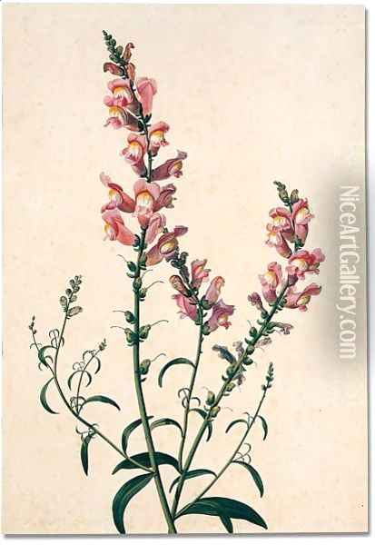 Study of a spray of snapdragons Oil Painting - Pancrace Bessa