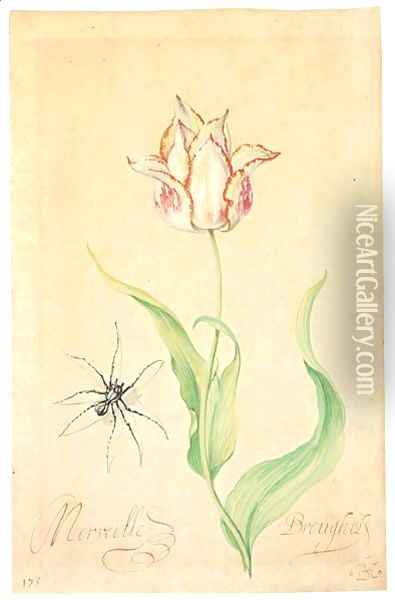 A Tulip 'Merveille Breughel' And Spider Oil Painting - Balthasar Van Der Ast