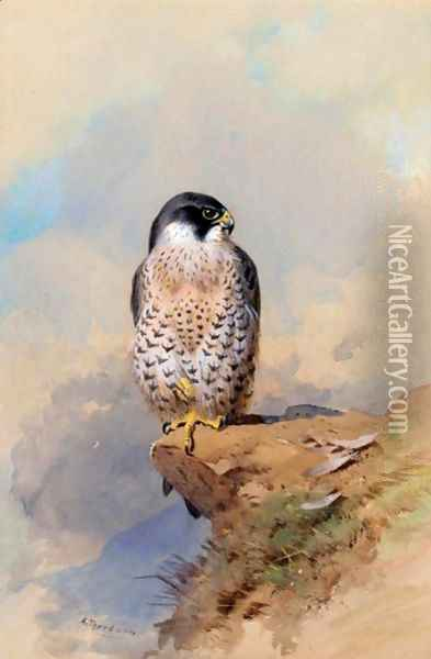 A Peregrine Falcon Oil Painting - Archibald Thorburn