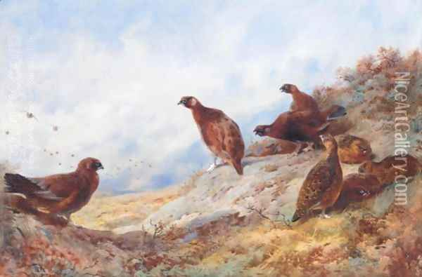 Cock And Hen Red Grouse High On The Moor Oil Painting - Archibald Thorburn