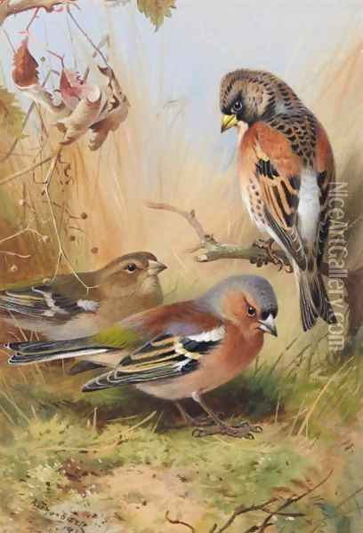 A Brambling And A Pair Of Chaffinches Oil Painting - Archibald Thorburn