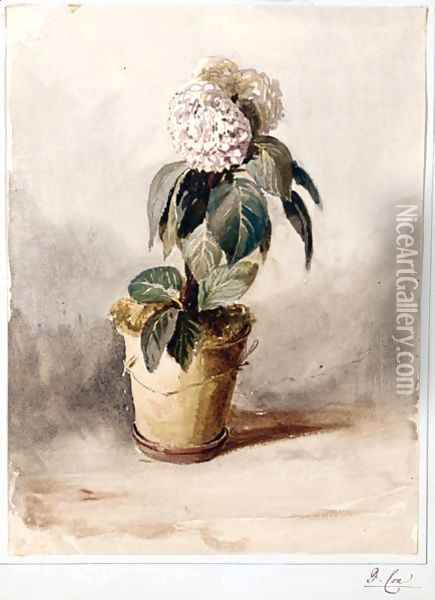Still-Life Of A Hydrangea Oil Painting - David Cox