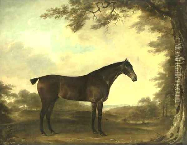 Portrait Of A Horse Age 19 Years Oil Painting - Thomas Weaver