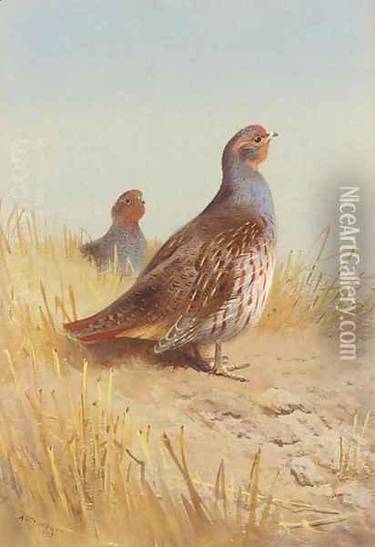 A Pair Of English Partridges Oil Painting - Archibald Thorburn