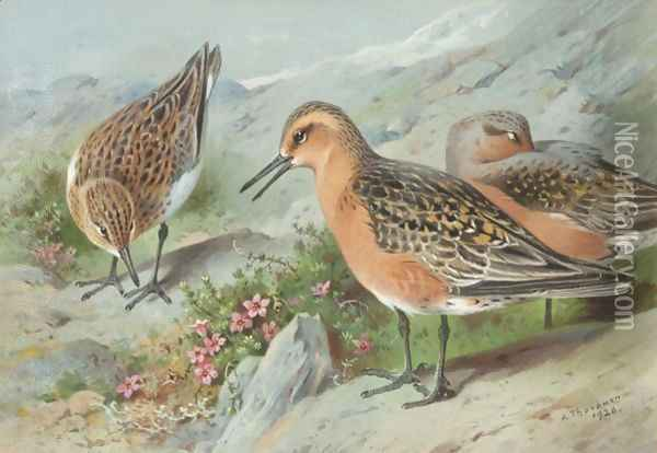 A Trio Of Knots Oil Painting - Archibald Thorburn