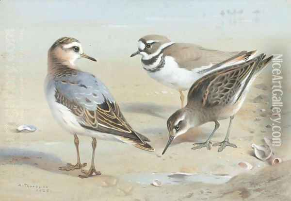 A Knot, A Sandpiper And A Little Ringed Plover Oil Painting - Archibald Thorburn