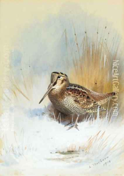 A Woodcock Oil Painting - Archibald Thorburn