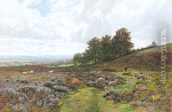 Sheep Grazing On A Moorland Oil Painting - George Vicat Cole