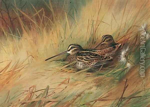 Snipe 3 Oil Painting - Archibald Thorburn