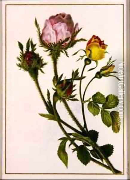 Musk Roses Oil Painting - Pancrace Bessa