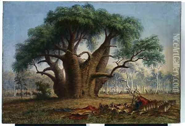 Gouty stem tree, Adansonia Gregorii, 58 feet circumference, near a creek south-east of Stokes Range, Victoria River Oil Painting - Thomas Baines