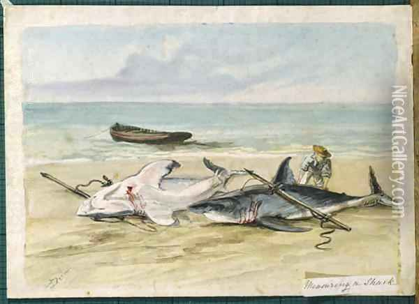 Man measuring two dead sharks on a beach, Walvis Bay, Namibia Oil Painting - Thomas Baines