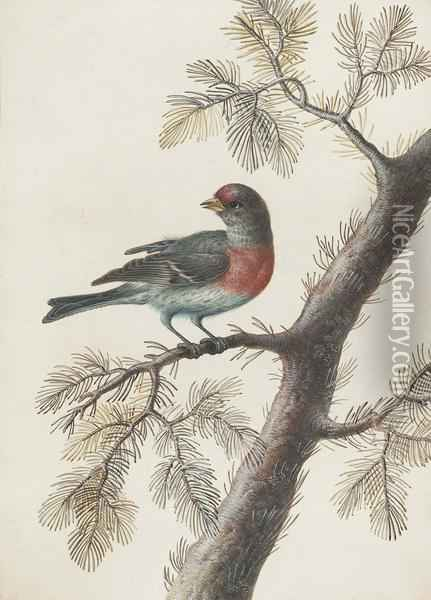 A Bird, Probably A Bullfinch, On A Pine Branch Oil Painting - Christophe-Ludwig Agricola