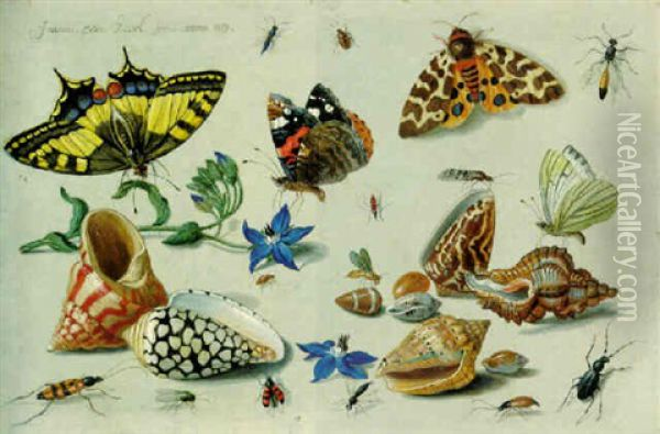 A Swallowtail, A Red Admiral And Other Insects, Harebell Flowers And Assorted Shells Oil Painting - Jan van Kessel the Elder