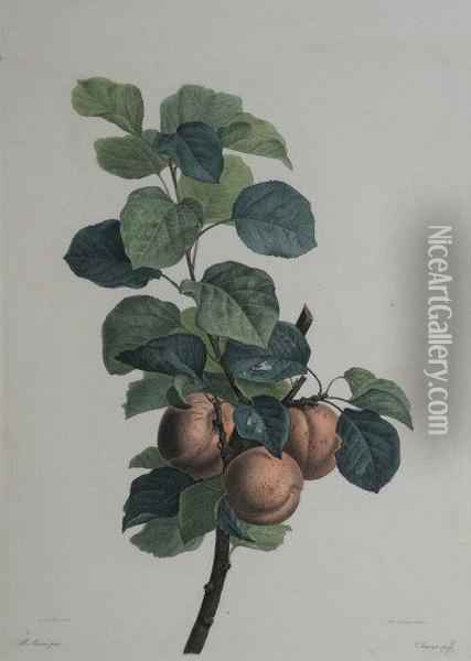 A Study Of Apples Oil Painting - Pancrace Bessa