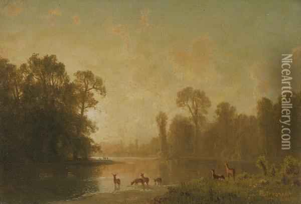 Twilight With Deer Oil Painting - Albert Bierstadt