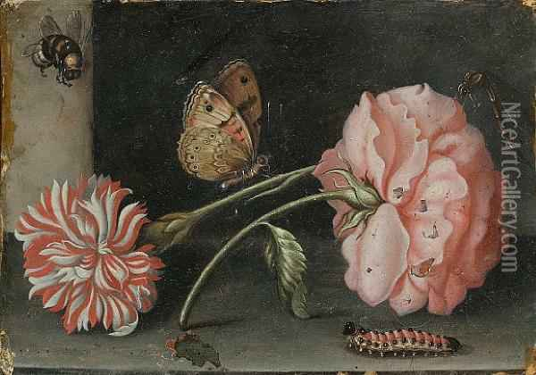 A Pink Rose And A Red And White Carnation On Astone Ledge With A Bee, A Butterfly, A Dragonfly And Acaterpillar Oil Painting - Abraham Bosschaert