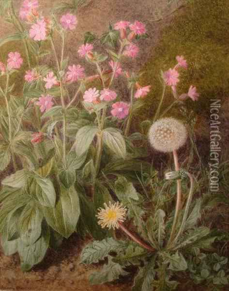 A Botanical Study Of Red Campions And Dandelions Oil Painting - Marian Emma Chase