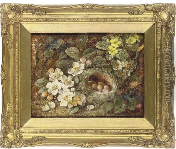 Primroses And A Bird's Nest On A Mossy Bank Oil Painting - Vincent Clare