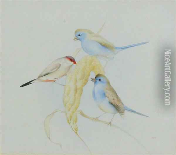 Studyof Three Finches Perced On An Ear Of Corn Oil Painting - Charles Maurice Detmold