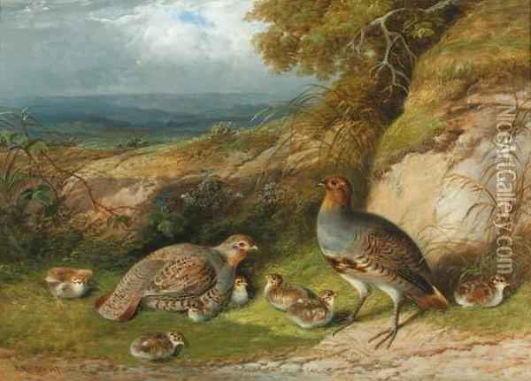Partridge With Their Chicks In A Landscape Oil Painting - F. Rolfe