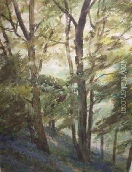 Bluebell Wood Oil Painting - Frank Saltfleet